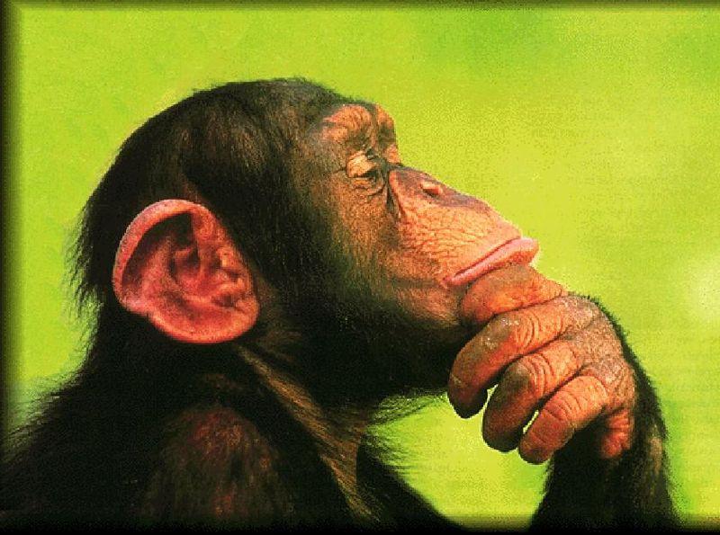 20130621-expert-monkey